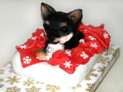 dort pes čivava a pelíšek