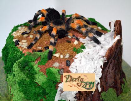 dort pavouk, chlupatý černý, Brachypelma smithi, sklípkan, Dorty-ZPM, Plzeň