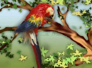 model - 24 papoušek